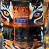 Hong Kong Tram Tiger